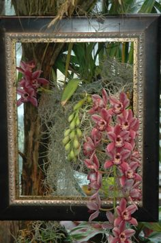 Orchids are displayed as a piece of art in Daniel Stowe Botanical Garden's Orchid Conservatory.