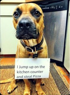 """""""I jump on the counter and steal pizza."""" ~ Dog Shaming shame - Oh the shame!"""
