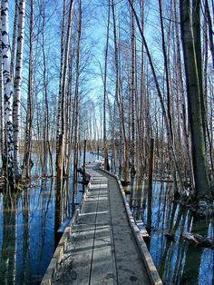 ronbeckdesigns: Winter path, Helsinki, Finland by Sameli on Flickr