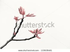Fig Tree On White Background Foto Stock: 133638461 : Shutterstock