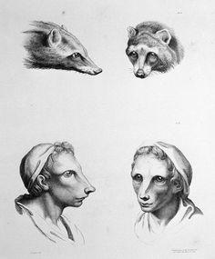Se evoluíssemos do Guaxinim (Foto: Reprodução/Charles Le Brun)
