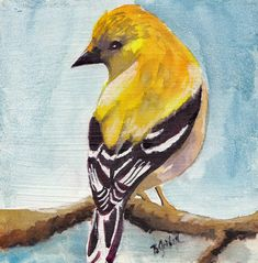 yellow finch painting Animals Pinterest Goldfinch