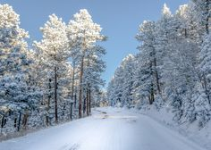 Magic winter forest / 4369 x 3121 / Forest / Photography | MIRIADNA.