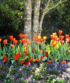 Shelia Arnold Photography Dothan Area Botanical Gardens