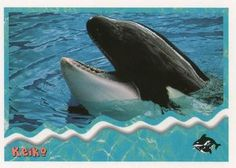 1995 SkyBox Free Willy The Adventure Home Keiko Front Free Willy, Sports Gallery, Trading Card Database, Trading Cards, Adventure, Animals, Animales, Animaux, Collector Cards