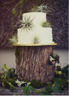 Air Plant WeddingsAugust 29, 2013 Posted by mwilliamsAir Plant Weddings found on SocietyBride.com