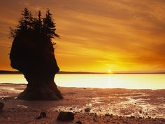 (© Barrett & MacKay/All Canada Photos/Getty Images); Hopewell Rocks on Bay of Fundy, New Brunswick, Canada Portal, Hopewell Rocks, New Seven Wonders, New Brunswick Canada, Unique Trees, Natural Wonders, Beautiful Places, Beautiful Sunset, National Parks