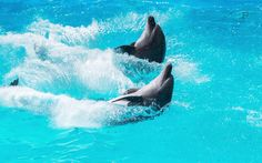 <p>Dolphins are being netted and forced into tiny containers by this traveling circus — this needs to stop!</p>