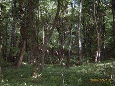 #Badacsony #erdő #Balaton