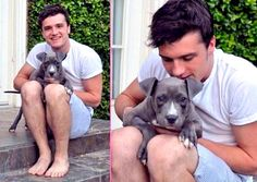 """Josh Hutcherson of The Hunger Games decided that he wanted to adopt a puppy – not just any kind of dog, but the most """"beautiful"""" breed there is – a pit bull."""