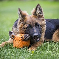 15 Indestructible Dog Toys - Durable Toys for Strong Dogs toys 15 Indestructible Dog Toys for Your Tough Chewer Tough Dog Toys, Small Dog Toys, Cute Dog Toys, Diy Dog Toys, Best Dog Toys, Pet Toys, Best Dogs, Dog Toy Basket, Dog Toy Box