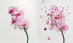 A flower's demise is a slow process—unless you're photographer Jon Shireman, in which case it happens with a quick pivot and a smash. He immerses his flowers to stiffen them, then flings them against a hard surface. The shattered remains are beautiful.