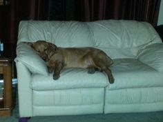My red lab abby being a couch girl lol