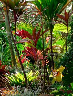 Wall Murals Landscape, Canvas Prints & Posters - Tropical Garden ...