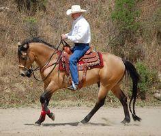 Responsive Riding