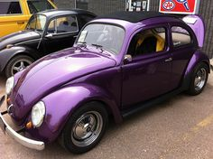 Purple Bug......How cute is that!!!!