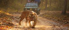 India | Alla ricerca della tigre
