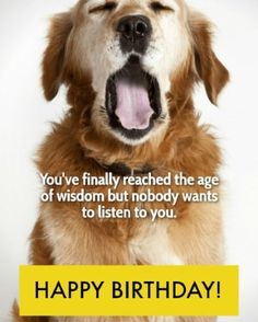 Now's the perfect time to share the gift of laughter with the funny birthday wishes and quotes here. Give a giggle today. Funny Birthday Message, Happy Birthday Wishes Messages, Birthday Wishes For Friend, Birthday Wishes Quotes, Happy Birthday Cards, Birthday Toast, Birthday Poems, Silk Knickers, Holiday Fun