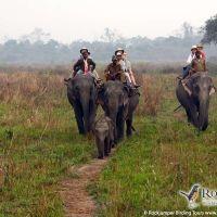 Elephant back safari in Kaziranga by Markus Lilje