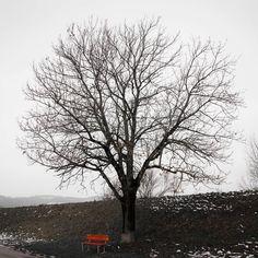 Heute mal nur ein Baum #landschaftsfotografie #landscapephotography #landscapelovers #landschaft #baum #allein #oberösterreich #fineart #photographer #landscaping #naturfoto #naturfotografie #travelphotography #travelgram #photooftheday #ruhe #naturpur #landscape_captures #landscapestyles_gf #epic_captures #beautiful #entspannen #düster #outdoorphoto #instagood #instaphoto #ig_shotz