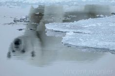 Vincent Munier - The ice is melting