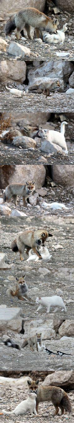 Katten och räven i Van Turkiet