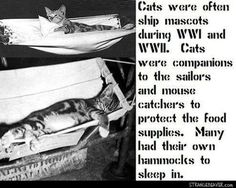 Interesting facts you may not have known Cat Lovers, Kitty Cats, Cats Bus, Here Kitty Kitty, Cats And Kittens, Funny Animals, Funny Cats, Cute Animals, Crazy Animals
