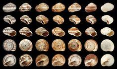 Ad C Cc Df F F Ef Df Science Images Sea Shells