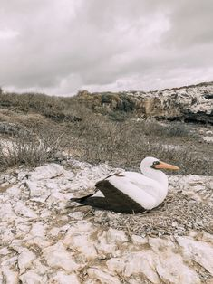 Our amazing trip to the Galapagos Islands and Machu Picchu in Peru, what we did, where we stayed, what tour company to use and what to expect Machu Picchu Travel, Busbee Style, Travel Necessities, Galapagos Islands, What Is Life About, Travel Guide, Traveling, Journey, Birds