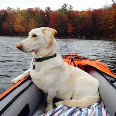 Kayaking with your dog can be wonderful or it can be a disaster. These 7 tips will help keep all of you safe, healthy and happy. What's better than kayaking? Kayaking with your best friend! Whether you are going exploring, getting some exercise or going for a casual paddle, the experience is always better when …