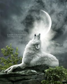 wolves art   White Wolf: Enchanted Fantasy Wolf Digital Art of Cindy Grundsten