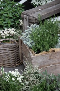Crates and burlap for plant displays - Piazzan