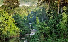 Heart of Borneo