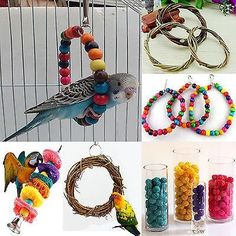 Colorful Swing Bird Toy Parrot Rope Harness Cage Parakeet Cockatiel Budgie co, The bird cage is both a home for the birds and an attractive tool. You are able to pick anything you want one of the bird cage versions and get much more specific images. Diy Budgie Toys, Diy Parrot Toys, Parakeet Toys, Diy Bird Toys, Parrot Pet, Diy Parakeet Cage, Homemade Bird Toys, Diy Bird Cage, Bird Cages