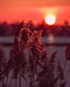 Love bring me summer nights. Midnight sun and breeze made of strawberries and mints. Love bring me summer nights and Ill worship all… Lapland Finland, Midnight Sun, Winter Snow, Summer Nights, Strawberries, Ukraine, Breeze, Worship, Northern Lights
