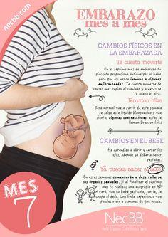 """infografía para pinterest NecBB """"El embarazo mes a mes"""" (Mes 7)"""
