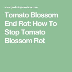 Tomato Blossom End Rot: How To Stop Tomato Blossom Rot