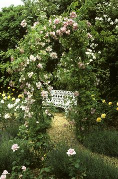The Rose Garden at Peckover House showing a pink hybrid tea rose 'Savoy Hotel' in the foreground with a mass of flowering roses climbing over a metal arch and a garden seat behind