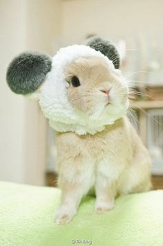 are those ears? ear muffs? Is this real?