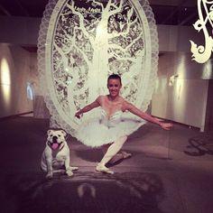 """Ballerina Bulldog ♡ Aldri-si-Aldri """" Frøya"""