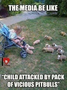 Hey look at this guys cute baby pitbulls hmmmmm? Oh my goodness! Help! Do you see this? They are touching the stroller! God people!!! These dogs don't do anything but love! Take a look at my post next to this.