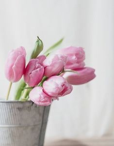 Pink Tulips, Spring Day, Spring Colors, Hedges, Beautiful Flowers, Bloom, Rose, Pretty, Plants