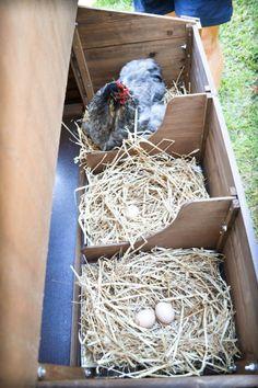 Chicken coop Más