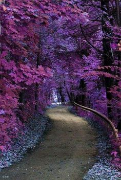 rainy purple forest photos - Google Search
