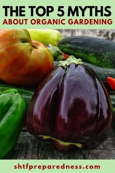 The Top 5 Myths about Organic Gardening Gardening For Beginners, Gardening Tips, Hydroponic Gardening, Flower Gardening, Low Growing Shrubs, Bush Beans, Home Vegetable Garden, Fresh Fruits And Vegetables, Garden Pests