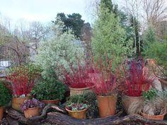 Winter Plants, Winter Garden, Outdoor Plants, Car Parking, Container Gardening, Evergreen, Yard, Display, Canning