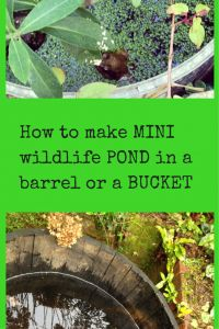 How to make a mini wildlife pond from a bucket