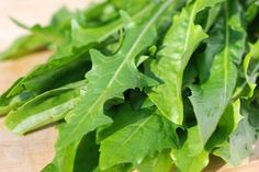 Dandelion Salad. For those who like to eat on the wild side! #foraging