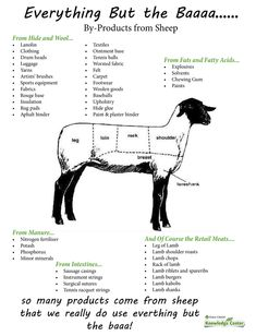 Everything But the Baaa...a Fact Sheet about the many products made from sheep with a corresponding worksheet and answer key!