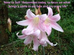 Remember today to focus on what brings a smile to my face and joy to my heart.